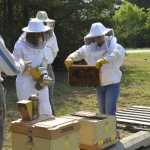 local beekeepers